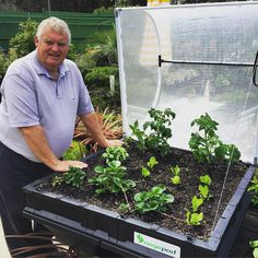 Pete along the beautiful Great Ocean Road shows his new toddlers placed in the safety and quick-growing Vegepod crèche. strawberries lettuce tommies basil and capsicum. Medium pod Anglesea by vegepod