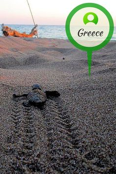 Travel to historic Greece with our volunteers as they make sure nesting turtles and their hatchlings make it safely to the sea.  www.gvi.co.uk Turtle Conservation, Volunteers, Turtles, Greece, This Is Us, Sea, How To Make, Movie Posters, Travel