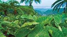 Valley of the South Seas