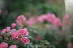 lemgo flowers
