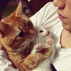 My Princess And Her Little Brother   cats funny pictures