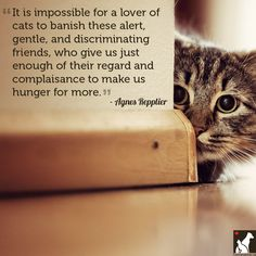 11 Quotes for the Love of Dog (or Cat) (http://www.homesalive.ca/blog/for-the-love-of-dog-or-cat)