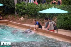 Guests feeding Dolphins