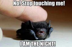 I AM THE NIGHT! Oh my gosh, it's so cute! Eessa beebee batsy oomigoodness *splort*