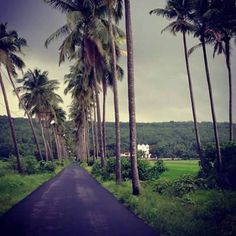 If you all care for environment, all Pinterest pi need please share & sign this petition to stop the cutting of coconut trees in Goa http://www.ipetitions.com/petition/save-coconut-trees-of-goacoconutlove Petition Save Coconut Trees of Goa...‪#‎CoconutLove