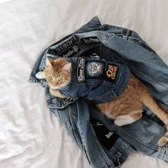 One tough cat! Olly rocking his custom battle jacket.  https://www.etsy.com/au/shop/PetHaus