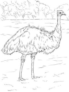 Realistic Emu Coloring Page From Category Select 30198 Printable Crafts Of Cartoons Nature Animals Bible And Many More