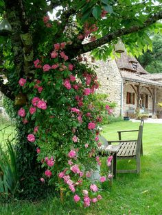 From My French Country Garden. Tree with climbing pink flowers, a bench and a stone cottage in the background.