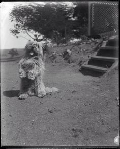 via Cairn Terriers Vintage Dog Photography Pudding and Yesterday