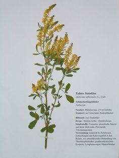 herbarium herbarium pinterest deckblatt decken und blumen. Black Bedroom Furniture Sets. Home Design Ideas