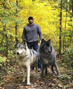 🐺If you Love Wolves, You Must Check The Link In Our Bio 🔥 Exclusive Wolf Related Products on Sale for a Limited Time Only! Tag a Wolf Lover! Beautiful Wolves, Beautiful Dogs, Animals Beautiful, Animal Gato, Amor Animal, Large Animals, Animals And Pets, Nature Animals, Cute Funny Animals
