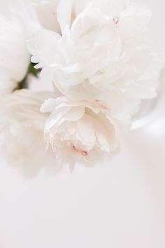 White Peonies in the Spring - Hej Doll Peonies And Hydrangeas, Peonies Bouquet, White Peonies, White Roses, Peonies Garden, White Wallpaper, Flower Wallpaper, Wallpaper Backgrounds, Flower Aesthetic