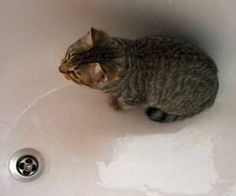 How to Bath the Kitten