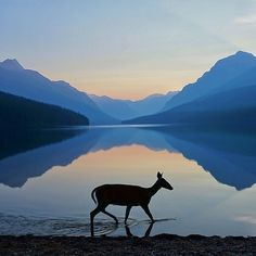 Beautiful shot of Glacier National Park. Lesson plan idea: tints/shades, silhouette, mountains