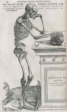 vesalius_pg_1641.jpg (857×1426)    death of books -