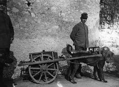 Fotos de la Primera Guerra Mundial: 99 aniversario del verano de su comienzo (IMÁGENES). 1917. Soldados italianos con perros.