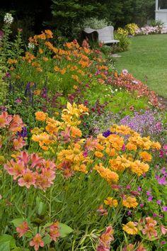 Hot Color ideas for Summer California Gardens / Armstrong Garden Centers
