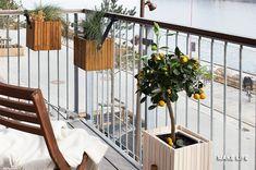 Αυτά είναι τα 7 κατάλληλα δέντρα για μπαλκόνι. Ανθεκτικά και ιδανικά για να διακοσμήσουν τις γλάστρες μας Δημοσιεύτηκε από: ΕΛΕΥΘΕΡΙΑ ΜΠΟΓΙΟΓΛΟΥ στο Οργάνωση Σπιτιού, Νοικοκυριό & Εξοικονόμηση - MAKE LiFE. Μόνιμος Σύνδεσμος: Διακόσμηση βεράντας. 7 δέντρα κατάλληλα για γλάστρα.
