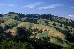 Briones, Lafayette Ridge. S93.13.13155 | OMCA COLLECTIONS