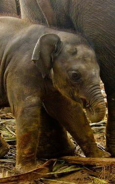 animals- nature photos - Comunidade - Google+