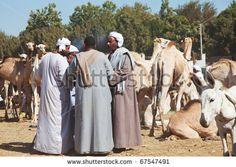 Livestock market, Egypt