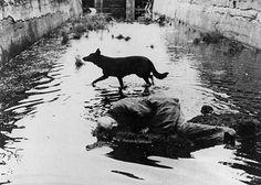 Según Ingmar Bergman, Andrei Tarkovsky fue el más grande todos los tiempos, el director que llevó el cine a su esencia de sueño.