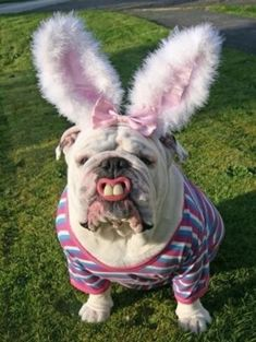 This bulldog who will keep your Easter dreams alive: