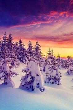 Winter dream landscape