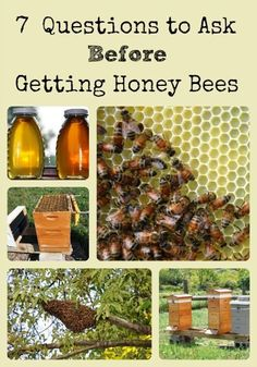 Identifies important questions and decisions that should be considered before committing to keeping honey bees via Better Hens and Gardens