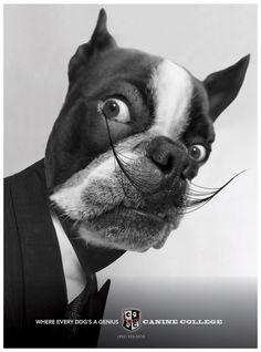Genius Dogs - Graphis