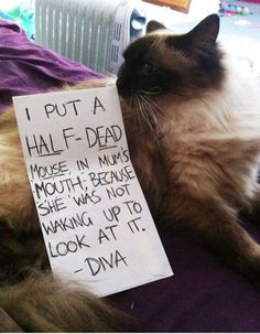 An epic gallery of cat shaming pictures that prove these cats are the naughtiest in the world. A hilarious cat shaming picture gallery. Cute Funny Animals, Funny Cute, The Funny, Cute Cats, Super Funny, Cat Shaming, Public Shaming, Funny Dog Shaming, Dog Shaming Photos