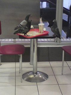 """""""You've seen nothing until you've seen a picture of a pigeon having a job interview to become a pigeon:"""" Funny Animal Pictures, Funny Images, Funny Photos, Funny Animals, Hilarious Pictures, Animal Pics, Never Not Funny, Cursed Images, Haha Funny"""