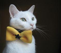 Cat wearing bow tie