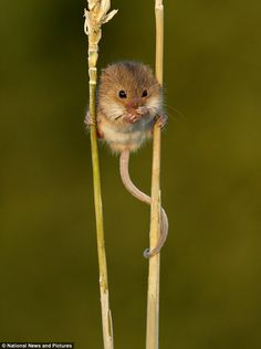 Precious little creature.... as long as he stays out there in nature, where he belongs.  ; )