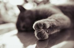 25 of the most purrfect cat photos Crazy Cat Lady, Crazy Cats, I Love Cats, Cute Cats, All About Cats, Sweet Dreams, Monochrome, Walks, Search