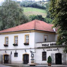 #Tokaj #wine cellar and #vineyard, #Hungary Photo: Martin Klimenta #EuropeTravelwithMIR #hungarytravel #hungarytourism #hungarianwine #winetourism #winetours #centraleurope #easterneurope #everydaycentraleurope #travel #tourism #wanderlust #worlderlust #beautifuldestinations #worldsbestwine #europe #vino #winery