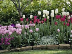 To plan a garden design that you will love, it is important to do some research and brainstorming before digging. Coming up with the right garden design does take time, so it is worth doing this up front. Outdoor Landscaping, Front Yard Landscaping, Outdoor Gardens, Landscaping Ideas, Landscaping Plants, Tulips Garden, Daffodils, Flower Landscape, Garden Shrubs