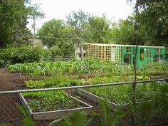 Sustain (SU) Community Garden on U of A campus!