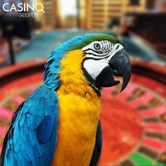 "🐦 ""Intelektas be ambicijų yra kaip paukštis be sparnų. 6 Traits, Play Casino Games, Lose Your Mind, Lottery Tickets, Winning The Lottery, Best Player, Online Casino, Ambition, Statues"