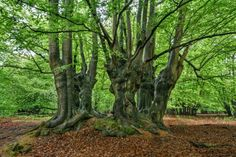 Epping Forest celebrates 800th anniversary of Forest Charter
