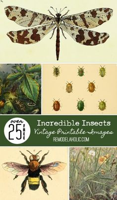 Add some unique art to your home with these free and beautiful vintage printable insect images! Dragonflies, bees, and more