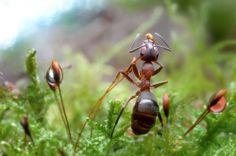 Die Welt der Ameisen