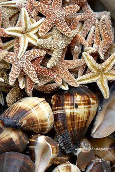 Caribbean sea shells.  #bvi #virginislands #beach