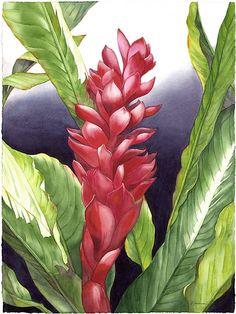 Just Call me Ginger by Barbara Groenteman Watercolor ~  x