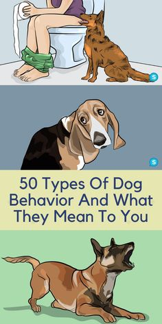 Weird Things, Amazing Things, Dog Names Male, Animals And Pets, Cute Animals, Types Of Dogs, Crazy Dog, Good Jokes, Weird World