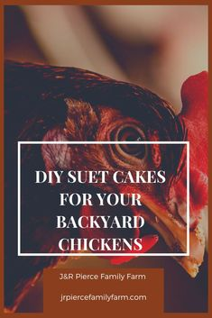 Do you raise a flock of backyard chickens? Homemade DIY suet is easy to make and will be nutritionally dense for your chickens. Here are tips on how to make your own suet cakes from common homestead pantry staples. Chicken Fajitas Calories, Chicken Fajitas Seasoning, Baked Chicken Fajitas, Suet Cake Recipe, Diy Herb Garden, Vegetable Gardening, Container Gardening, Gardening Tips, Garden Ideas