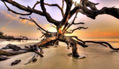 The beautiful Driftwood Beach on Jekyll Island captured by David Fisher