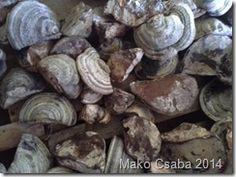 Amadou Products: Fomes Fomentarius supplier Romania