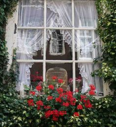 """""""Enjoying the streetside window boxes on an Amsterdam canal house."""" ~ curtains and window box exceptionally charming"""