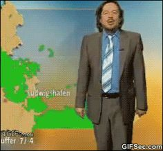 GIF: Oh look a cat - www.gifsec.com Best Funny Videos, Be A Better Person, Weather Report, Weather Forecast, Cats And Kittens, Siamese Cats, Funny Cats, Funny Animals, Cute Animals
